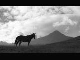Конят и планината ; comments:178