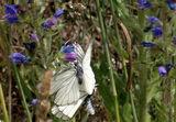 Танц в бяло... ; Comments:9