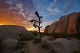 Joshua Tree National Park ; comments:118