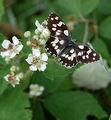 пеперудка 2 ; Comments:6