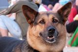 Добро куче ; comments:8