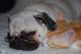 Като куче и котка... ; comments:3