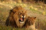Царят на животните... ; comments:42
