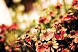 фламенко настроения ; Comments:8