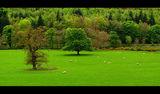 Северен Уелс 6 ; comments:38