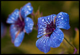 Blue ; Comments:20