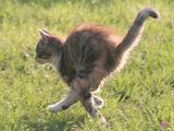 акробатика ; comments:8