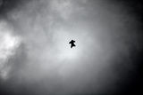 wingsuite ; comments:6