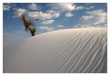 White sands ; comments:73