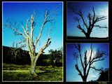 природа ; comments:5