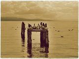 bird airport in Ohrid lake ; comments:11