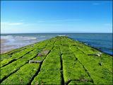 Зеленият път ; comments:17