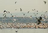 Птиците ; comments:48