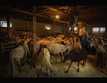 Черната овца ; comments:81
