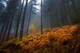 родопска есен ; comments:47