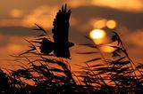 Срещу вятъра ... ; comments:57