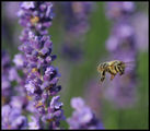 no name ( ID=1216716 ) ; comments:36