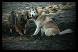 Зло куче... ; comments:7