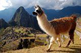 Мачу Пикчу, Перу ; comments:51