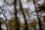 cobweb ; comments:31