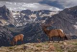 Горе в планината (репост) ; comments:99