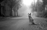 Есенни кучета ; comments:35