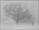 Самота ; comments:123