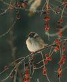 A Sparrow's Haiku ; comments:40