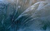 Творческото перо на майката природа ; comments:35