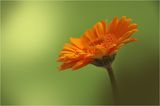 Orangevi Me4ti ; comments:27