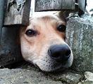 Пешо иска през оградата ; comments:7