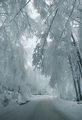 Let it snow.... ; Comments:24