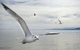 Птиците ; comments:25