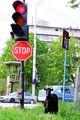 ДЕПУТАТ пешеходец ; comments:2