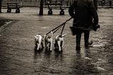 vie de chien en temps de cochon ; comments:55