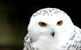 Ангелски очи... ; comments:24