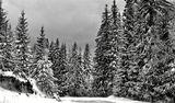 Зимна красота ; comments:31