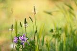 Нежен спомен от една отминала пролет.... ; comments:25