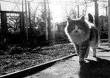 cat ; comments:1