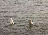 Синхронно плуване ; comments:3