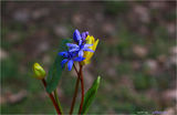 ...пролетно... ; comments:23