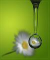 В зелената сълза..... ; comments:68