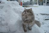 Пери в снега ; comments:2