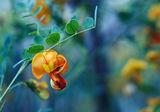 Обикновена снимка, на обикновено цвете, от обикновен фотолюбител....! :) ; comments:44