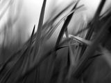 pinceaux de la nature ; comments:7