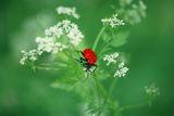 Пролетно червен * :) ; Коментари:10