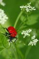 Пролетно червен ; Коментари:3