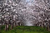 Пролет ; comments:36
