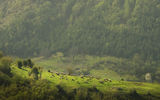 Пролет в Родопите ; comments:30