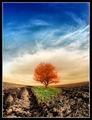 Сивосвеж огненоводен портрет на едно самотно дърво ; comments:33